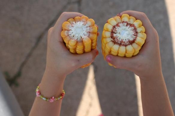 Corn Milk Lines