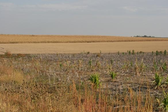Summer Fallow, Wheat Stubble, Corn