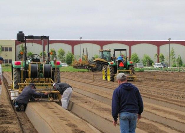 Strawberry Farming Small Town Nebraska