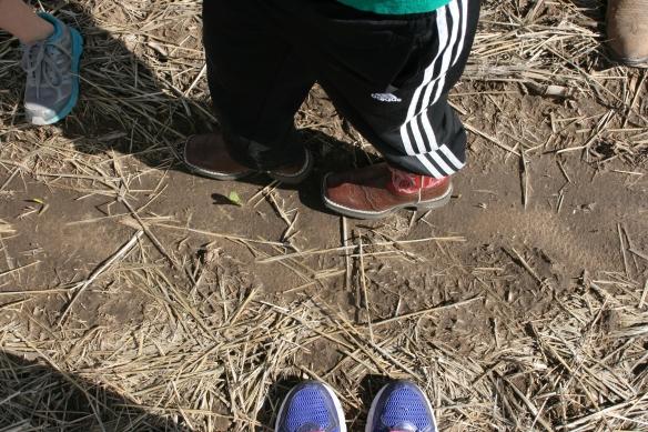 Dry Land Seed Spacing