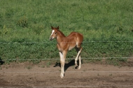 Adorable Foal