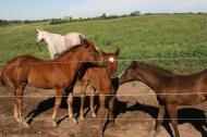 Foal Friends