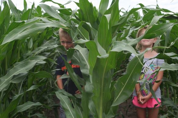 kids in the corn