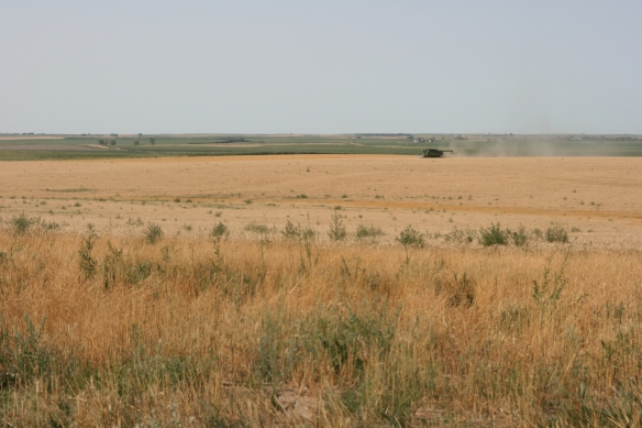 Wheat Harvest 2013