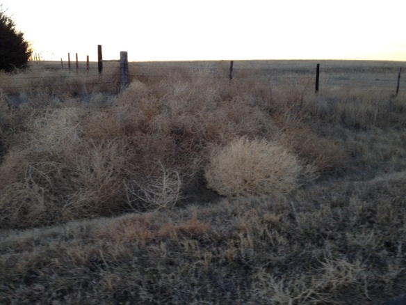 Tumbleweed ditch