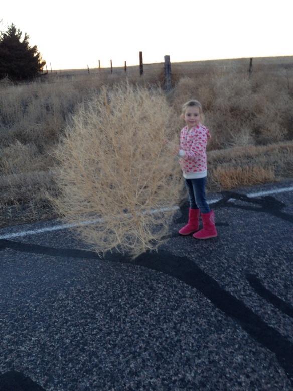 Giant Tumbleweed