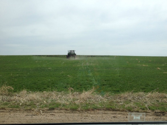 Spraying wheat