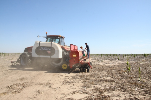 wheat drill