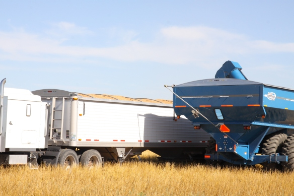 truck load of wheat