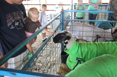 Looking at some State Fair quality sheep - raised by the cousins.