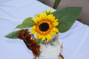 multi colored sunflower