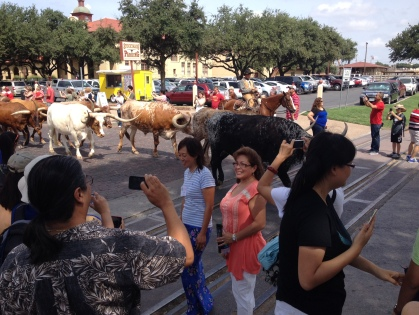 Fort Worth Stockyards - Check out those horns.