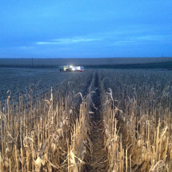 corn harvest at dusk