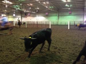 steer coming at you