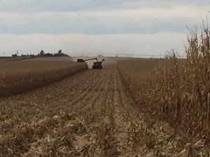 2016 Corn Harvest