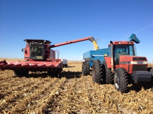 Corn Harvest 2016