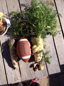 HUGE Carrots