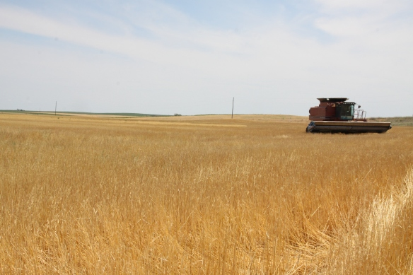 Wheat Harvest 2017