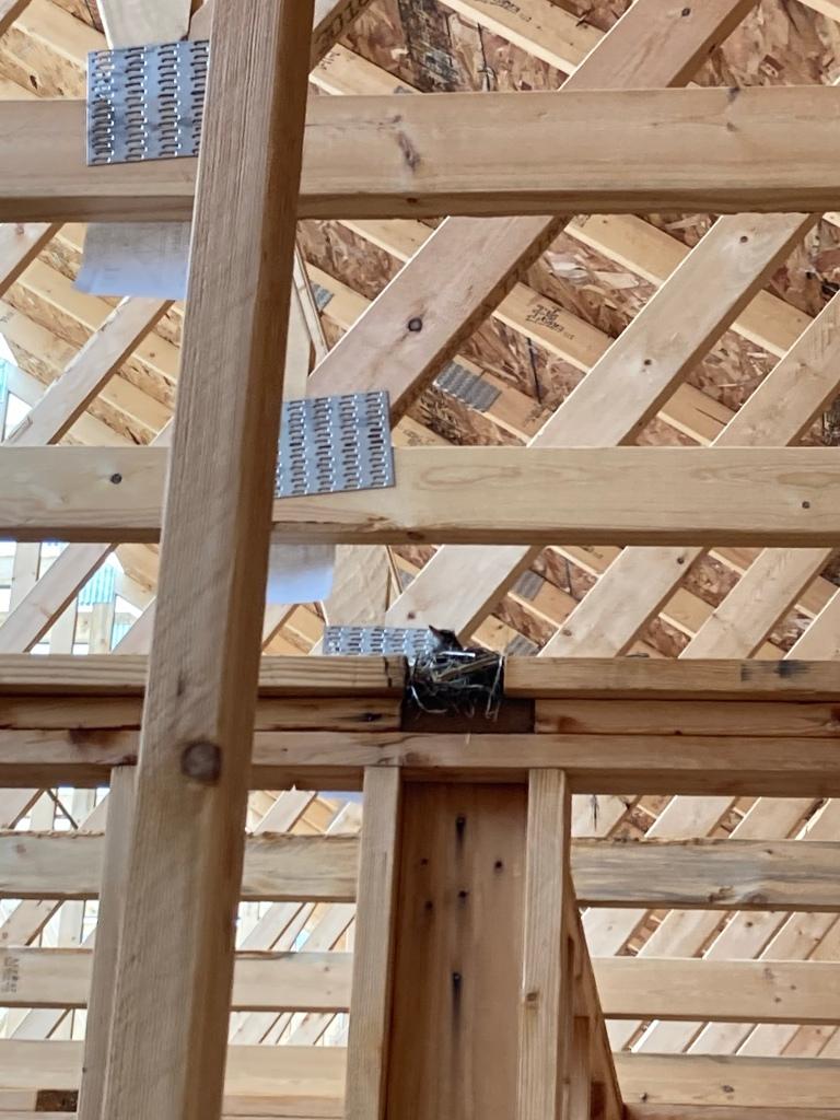 Robin in construction
