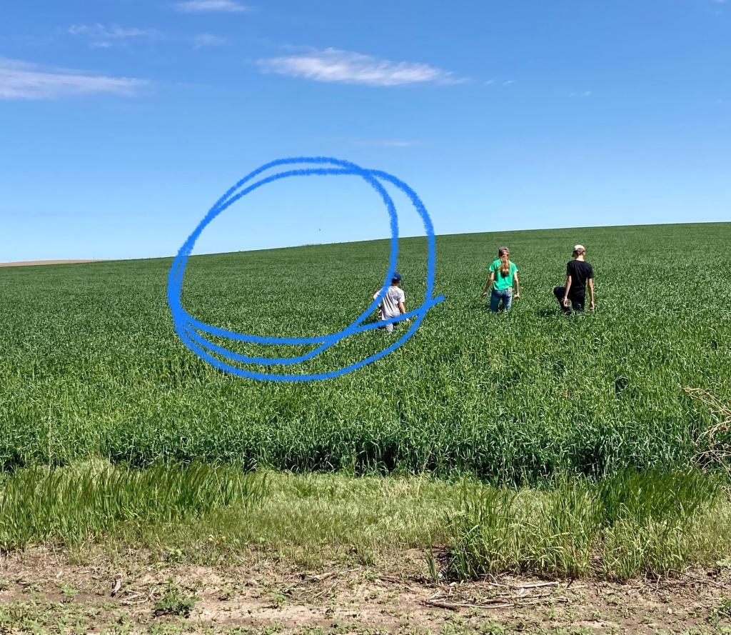 May Nebraska wheat